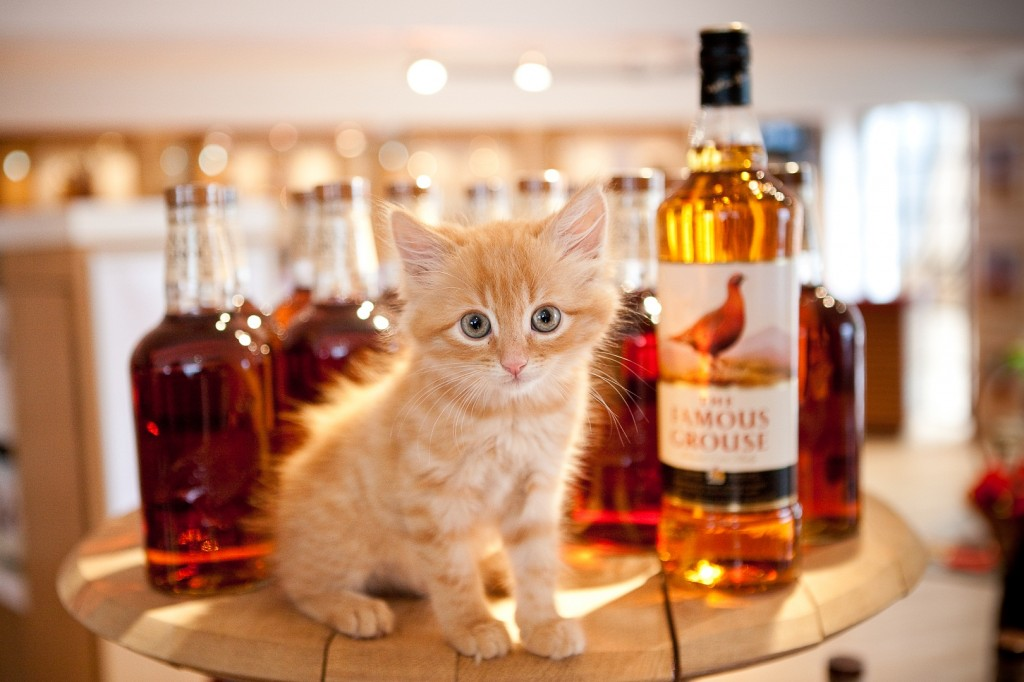 The-Famous-Grouse-distillery-cat-1024x682